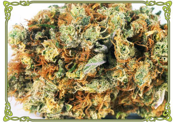 marijuana strain alien OG strain