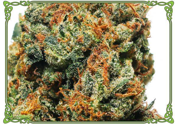 marijuana strain bermuda triangle strain